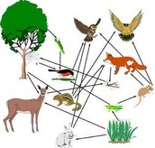 Grasshopper Food Web