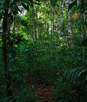 El tiempo de la jungla