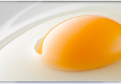 Uncooked Egg