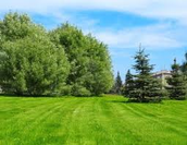 Trees and Lawn