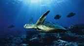 About marine biology