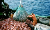 Definitions and Characteristics of Overfishing