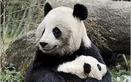 Our Panda and baby