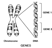 Heredity Developlment