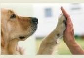 F-e-l-l Freunde ein Leben Lang Tierschutz Informationsseite