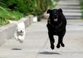 Wrangle up your four legged friends and check us out!!