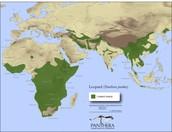 Leopard Range