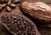 Kakao Üretilir.