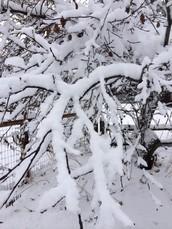Winter Storm Brings Wonder and Woes!