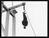 Hanging From a crane.
