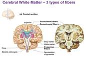 3 Types Of Fibers