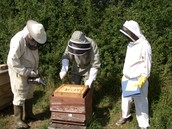One Day Introduction to Beekeeping Course