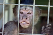 ☆Pros to Banning Zoos★