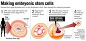 The Making of Embryonic Cells