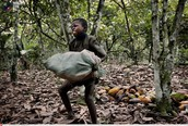 Boy forced to work on cocoa farms