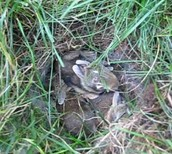 The baby bunnies