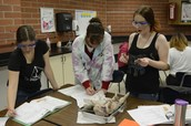 Dissecting Pigs