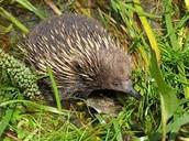 Wetland Animal