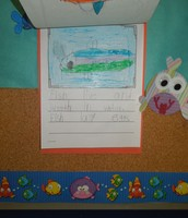 Using the graphic organizer to write two sentences about fish