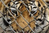 How are animals treated in zoos!