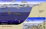 Some Sea Animals