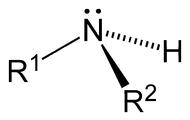 Вторичные - R2NH
