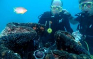 Diving: