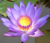 This may look beautiful, but don't get trapped inside the lotus