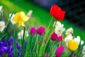 April-Acroustic