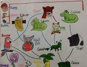 Rainforest Food Web