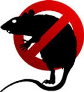 The Rat Slapper is a new product designed to punish rodents who disrespect your living space.