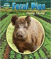 Feral Pigs: Chomp, Chomp! (They Don't Belong)