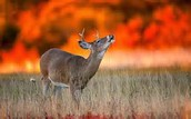 What/How is wildlife most affected by Wild Fires?