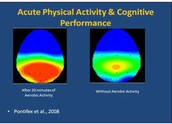 Physical Activity & Cognitive Performance