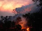מדור איכות הסביבה-השריפה בכרמל