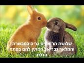ארנבים חמודים בצבעים : כתום ושחור.