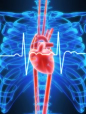 What is a cardiovascular Technologist?