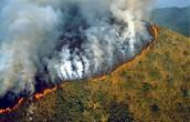 Brazil environmental concerns