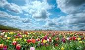 Pousser 1 jardin de fleurs