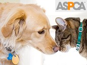 The ASPCA Foundation