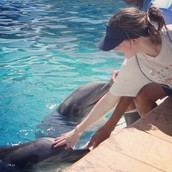 Petting A Dolphin At Dolphin Cove @ SeaWorld
