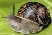 shellfishs