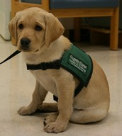 http://westernblind.blogspot.com/2011/11/wbrc-welcomes-new-guide-dog-puppy-in.html