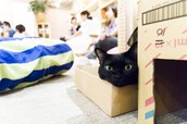 this is a picture of a cute black cat taken at a cat cafe in japan