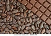 to caco beans to chocolate