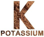 what happens if you don't get enough potassium? (hypokalimia)