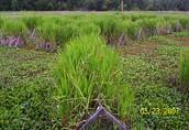 Marsh Species