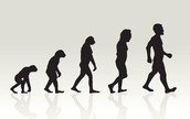 What is Evolutionary Biology?