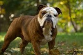 favorite breed of dogs