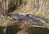 Exploring The Everglades
